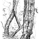 tree-2_0