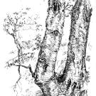 tree-3_0