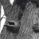 mysterious-hand-in-elm-tree