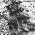oak-gtowing-around-railings