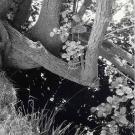 trees-by-a-stream-near-birstwith