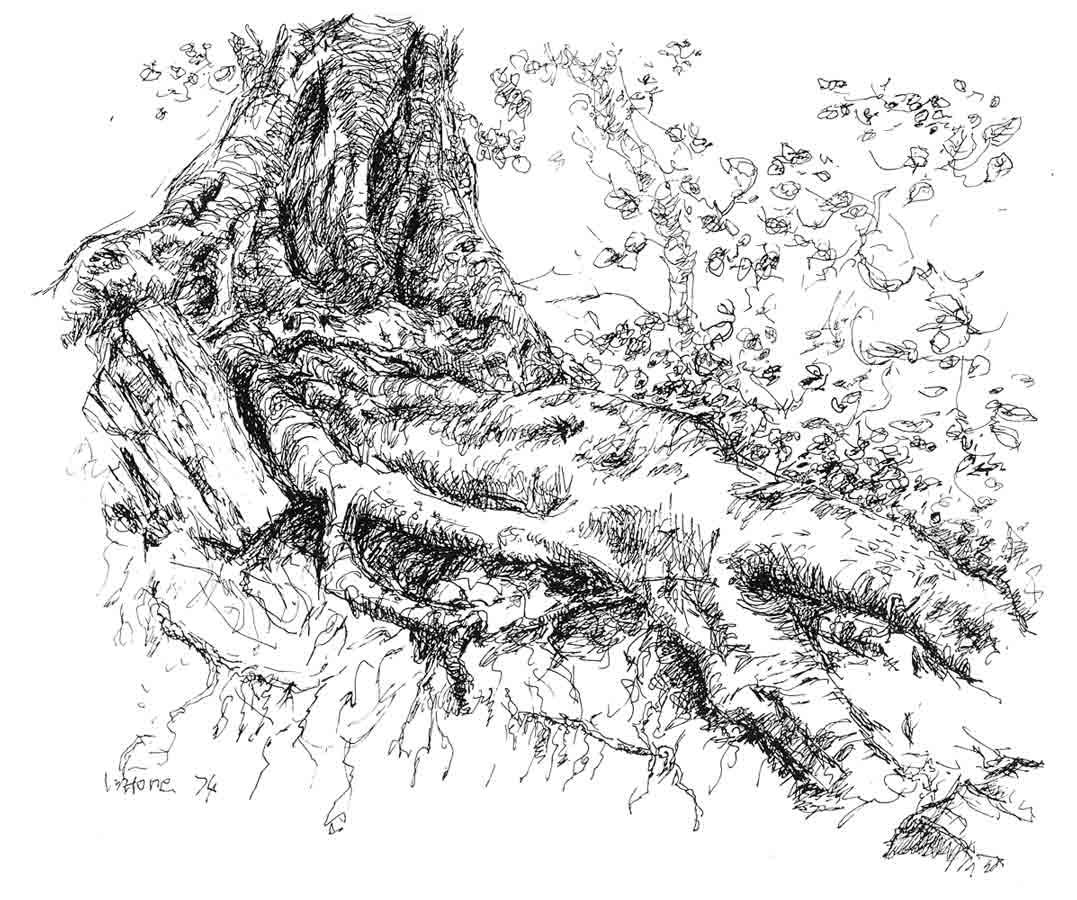 tree drawings herbert whone